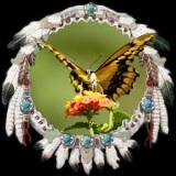 vlinder-clan